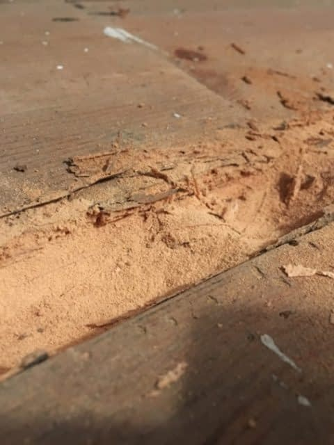 advance-timber-infestation-2